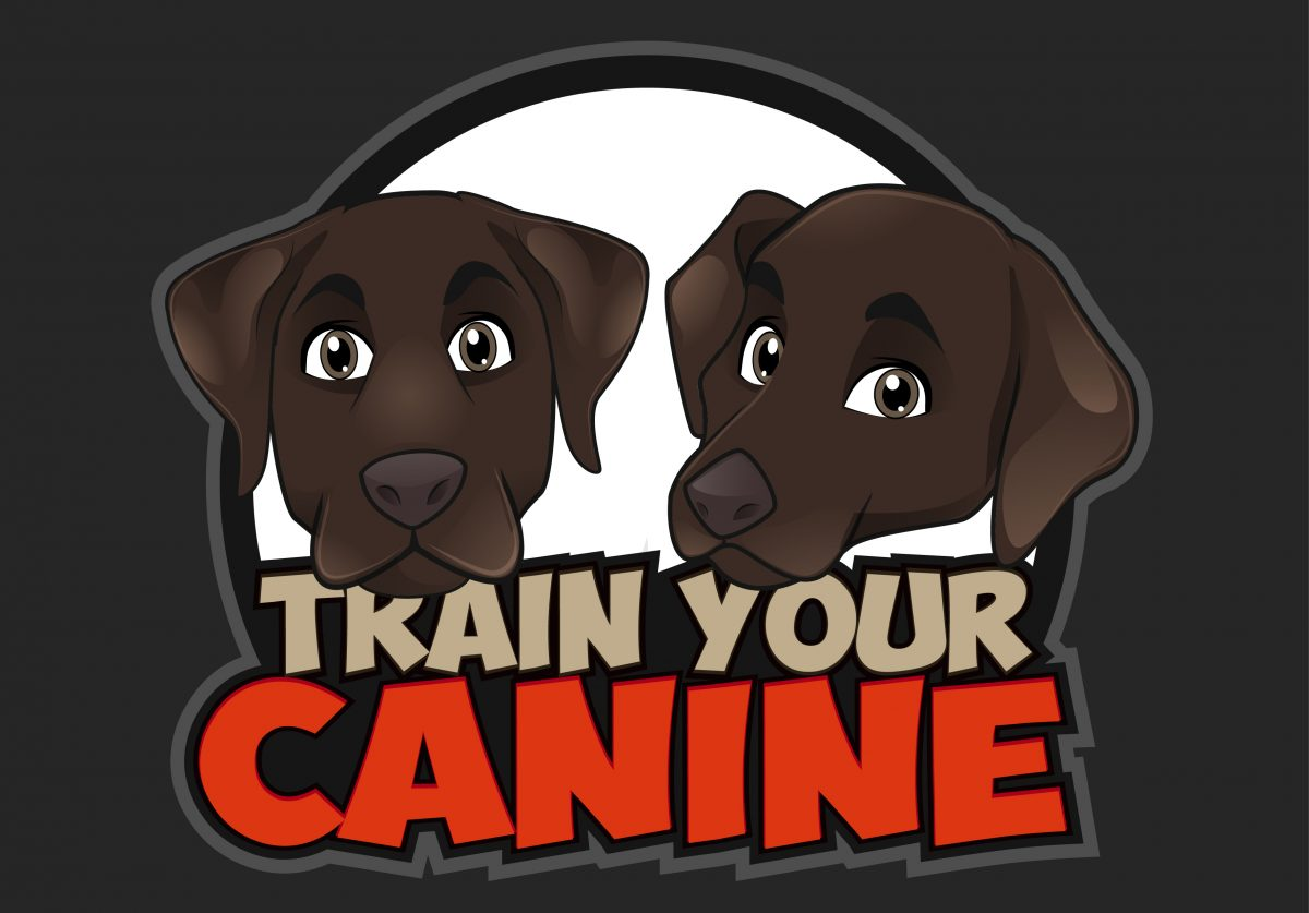 Train Your Canine Dog Training|Trainer Help to Train Your Dogs