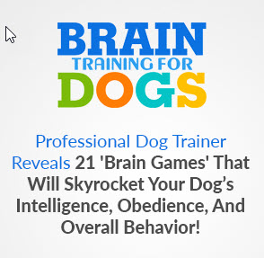 Train Your Dog Review