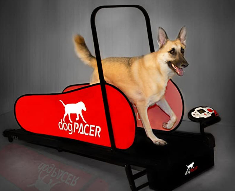 DogPacer treadmill for dogs